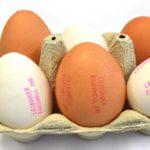 Application_Eggs_2